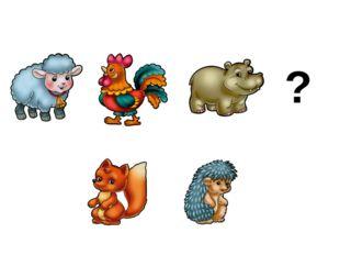 Кенгуру живет не в наших лесах. Игра «Кто лишний?»