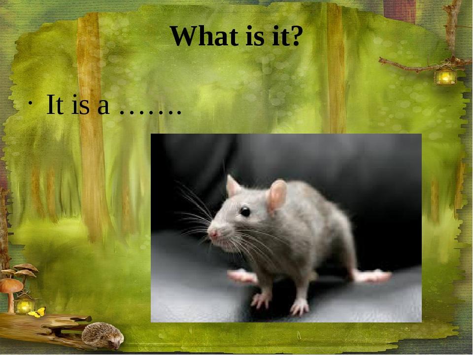 What is it? It is a …….