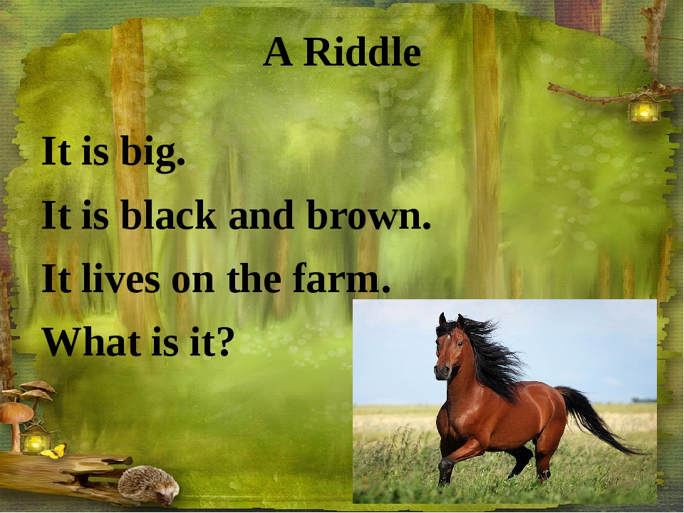 A Riddle It is big. It is black and brown. It lives on the farm. What is it?