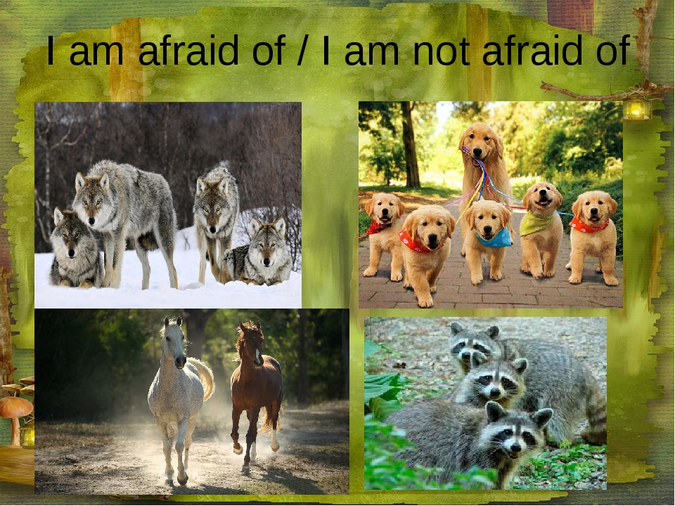 I am afraid of / I am not afraid of