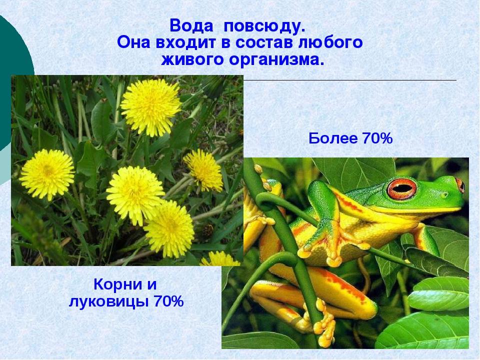 Корни и луковицы 70% Более 70% Вода повсюду. Она входит в состав любого живо...