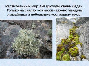 Растительный мир Антарктиды очень беден. Только на скалах «оазисов» можно ув