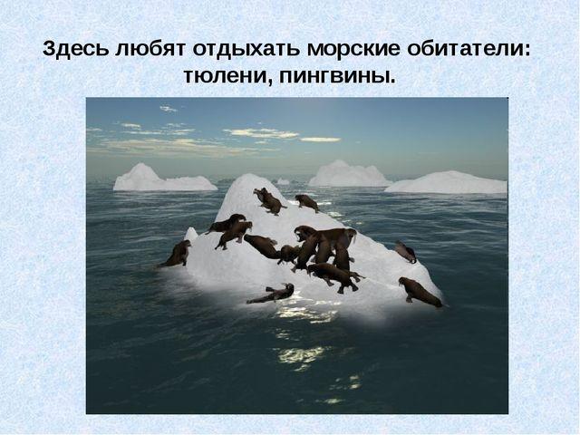 Здесь любят отдыхать морские обитатели: тюлени, пингвины.