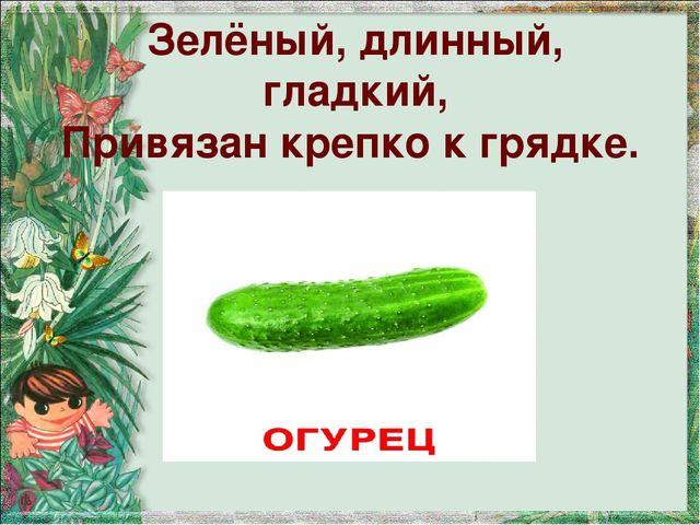 Зелёный, длинный, гладкий, Привязан крепко к грядке.