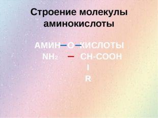Строение молекулы аминокислоты АМИН КИСЛОТЫ О NH2 CH-COOH I R