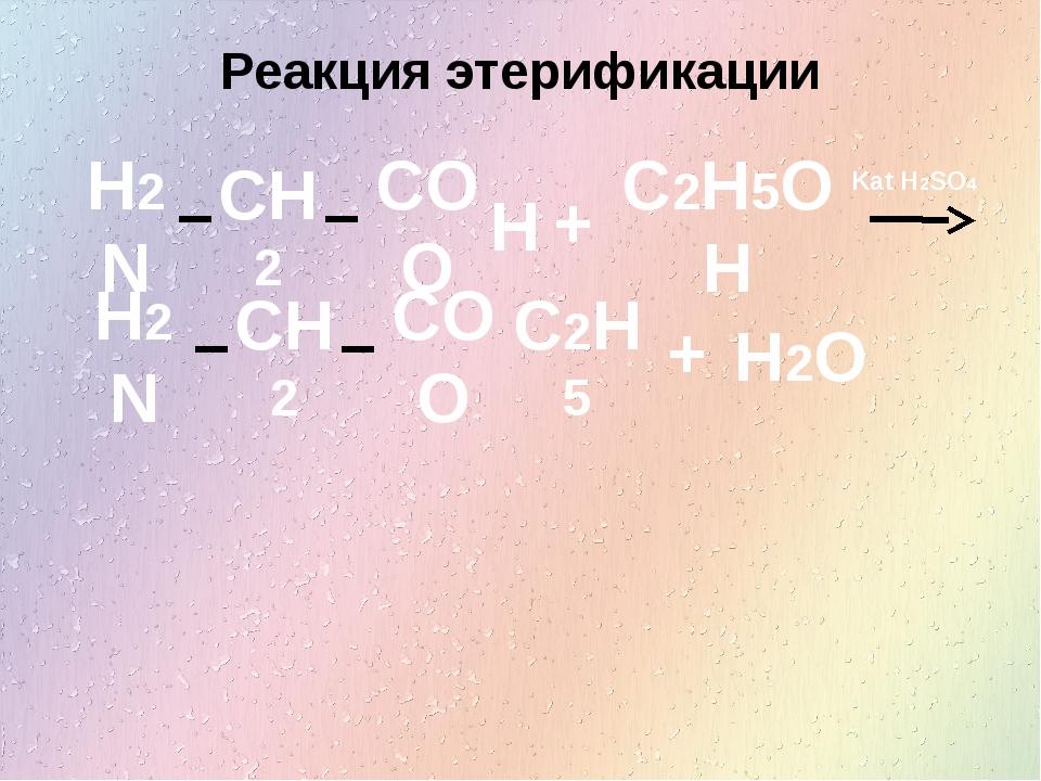 Реакция этерификации H2N CH2 COO H + C2H5OH H2N CH2 COO C2H5 + H2O Kat H2SO4
