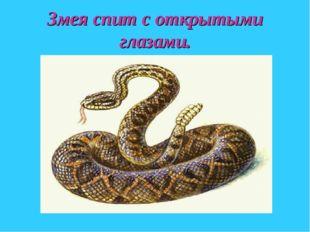 Змея спит с открытыми глазами.