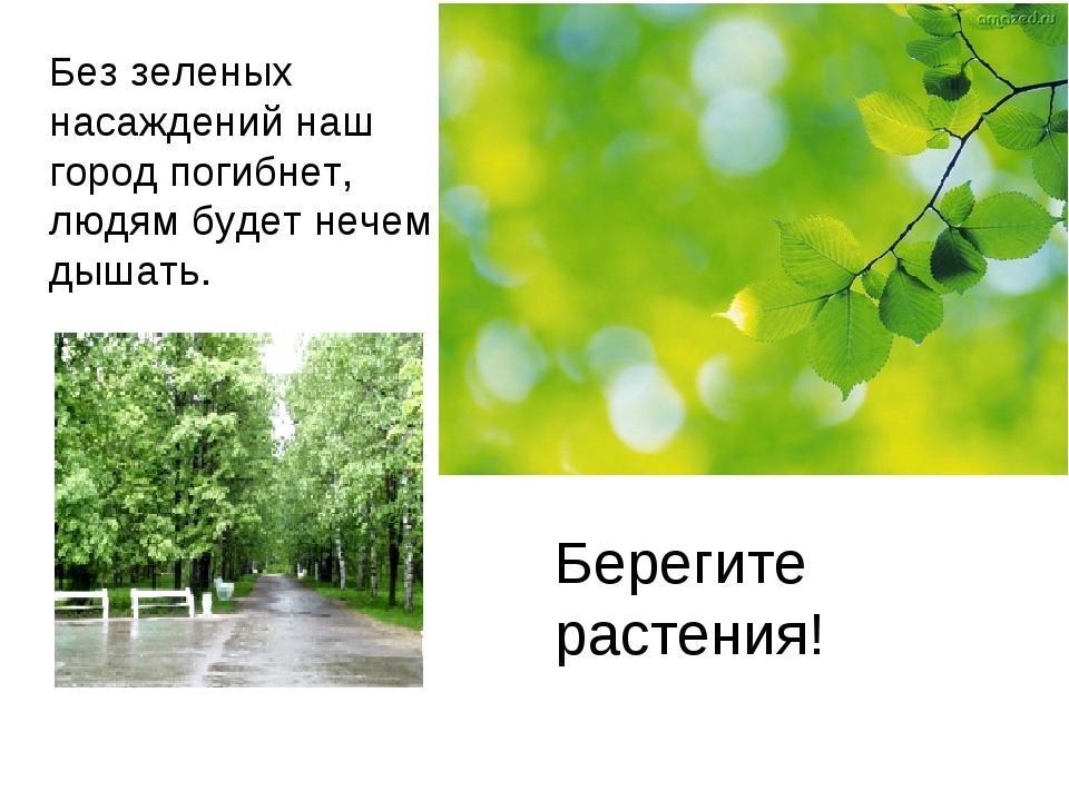 Без зеленых насаждений наш город погибнет, людям будет нечем дышать. Берегите...