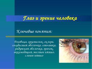 Глаз и зрение человека Ключевые понятия: Роговица, хрусталик, склера, сосудис