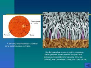 На фотографии, полученной с помощью сканирующего электронного микроскопа вид