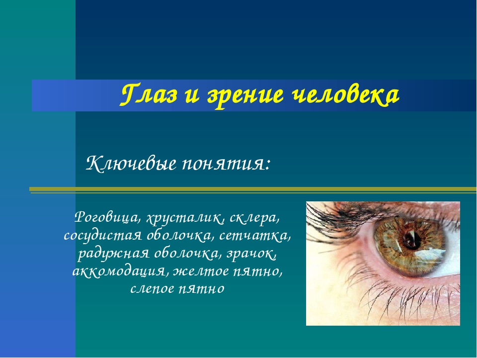 Глаз и зрение человека Ключевые понятия: Роговица, хрусталик, склера, сосудис...