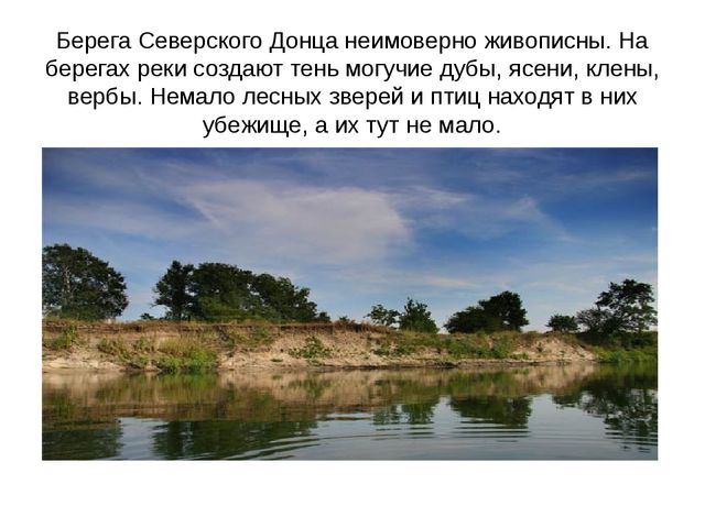 Берега Северского Донца неимоверно живописны. На берегах реки создают тень мо...