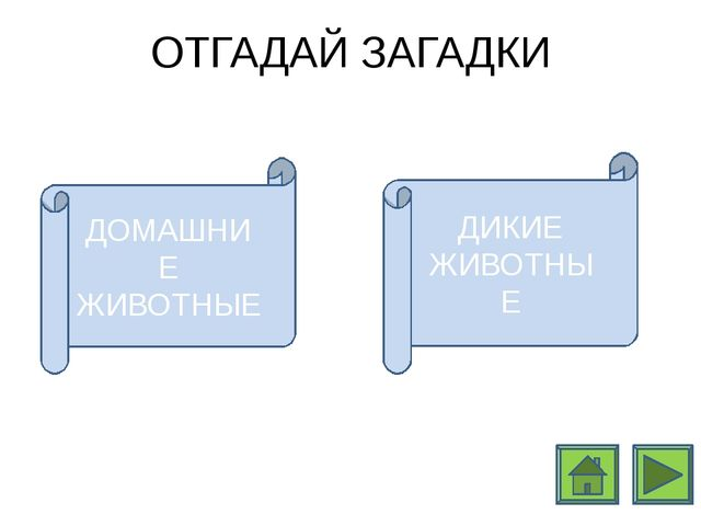http://www.darvinvet.ru/files/gryzuny/belki_2.jpg http://dreempics.com http:/...