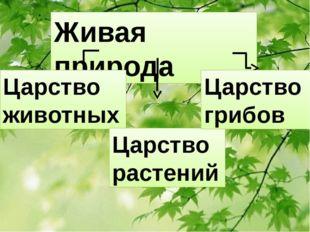 Живая природа Царство животных Царство растений Царство грибов