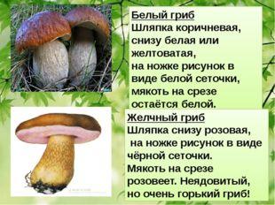 Белый гриб Шляпка коричневая, снизу белая или желтоватая, на ножке рисунок в