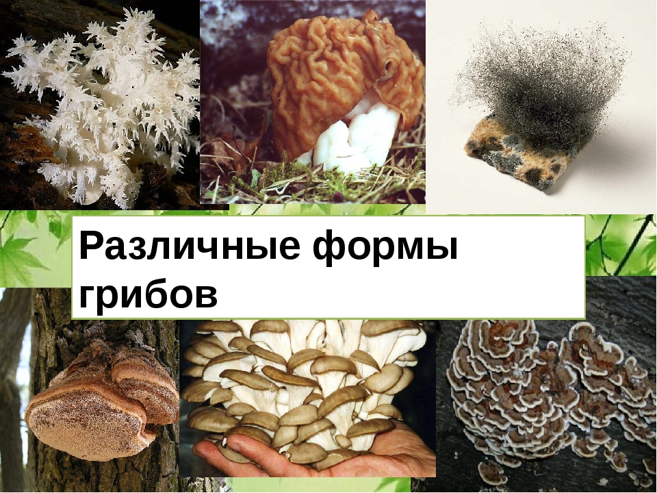 Различные формы грибов