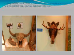 Среди раскопок нашли скелет головы буйвола и часть челюсти носорога. В лесах