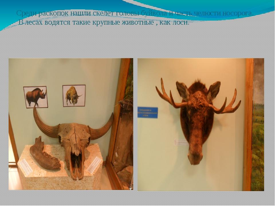 Среди раскопок нашли скелет головы буйвола и часть челюсти носорога. В лесах...