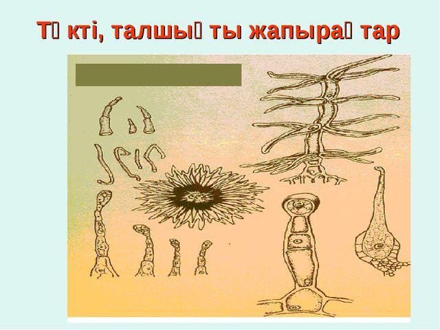 Түкті, талшықты жапырақтар