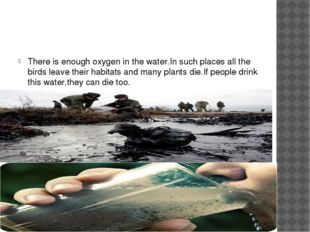 There is enough oxygen in the water.In such places all the birds leave their