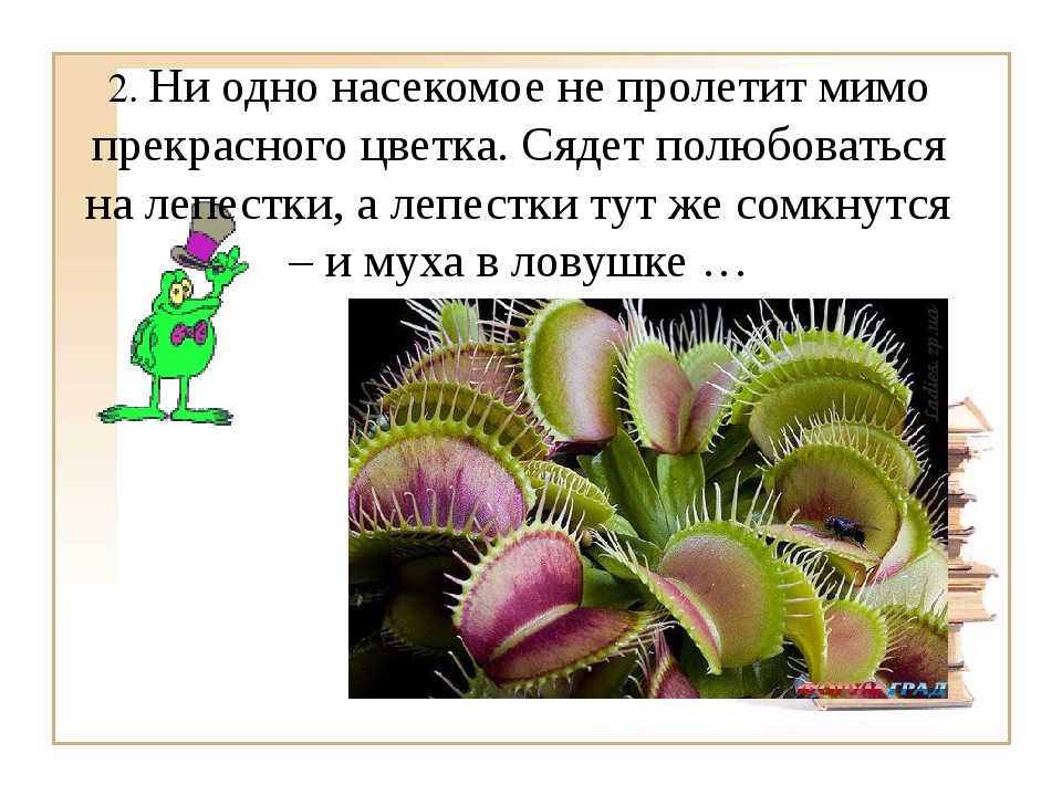 2. Ни одно насекомое не пролетит мимо прекрасного цветка. Сядет полюбоваться...