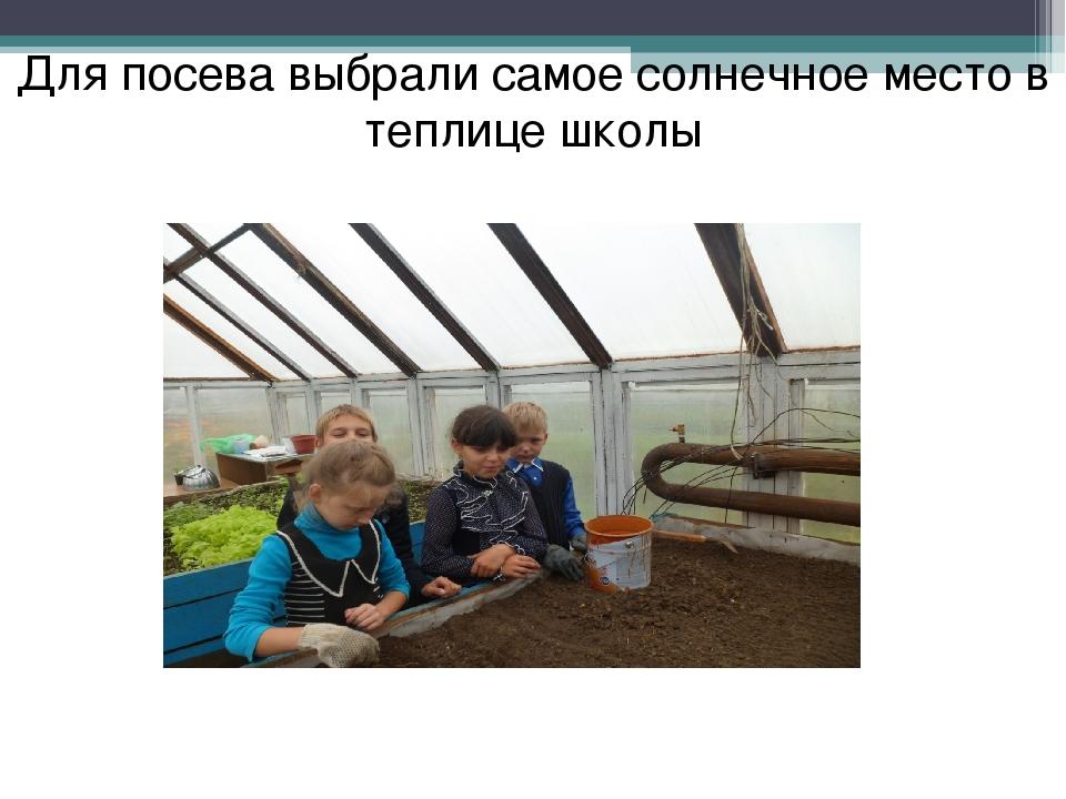 Для посева выбрали самое солнечное место в теплице школы