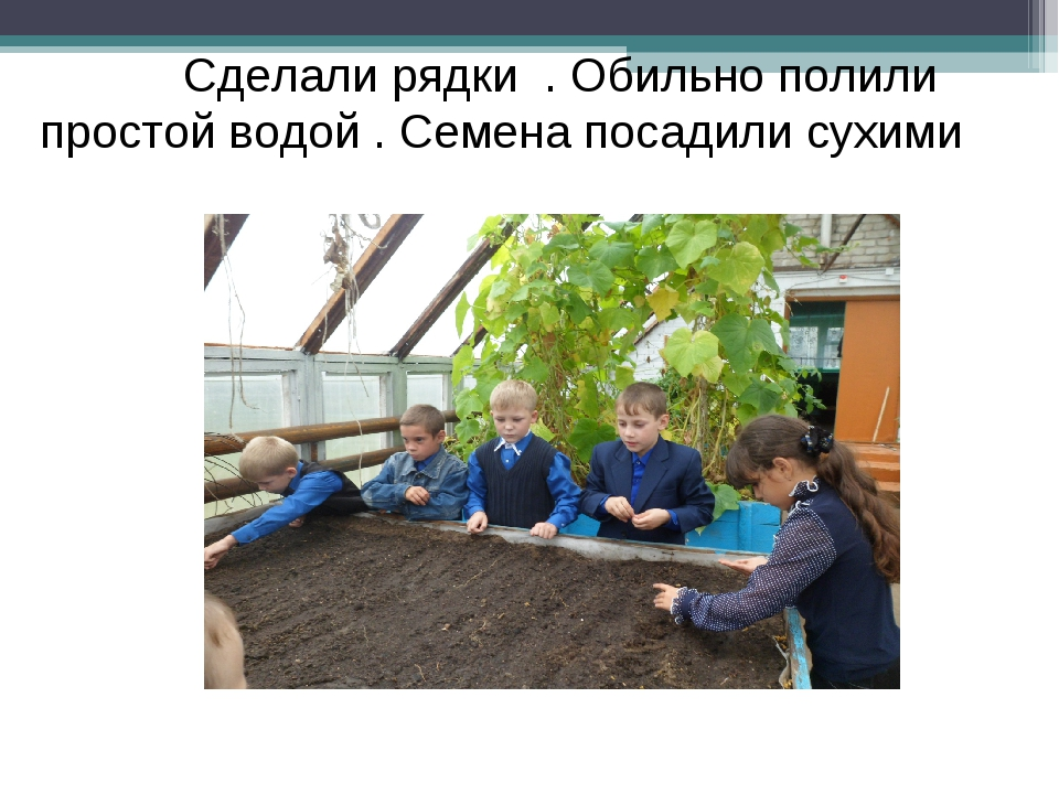 Сделали рядки . Обильно полили простой водой . Семена посадили сухими