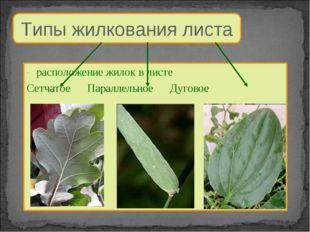 Типы жилкования листа расположение жилок в листе Сетчатое Параллельное Дуговое