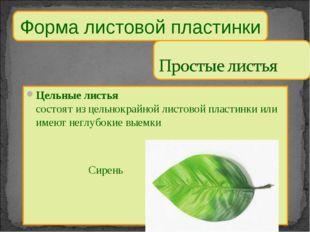 Форма листовой пластинки Цельные листья состоят из цельнокрайной листовой пла