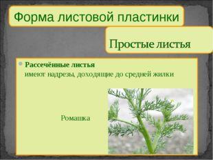 Форма листовой пластинки Рассечённые листья имеют надрезы, доходящие до средн