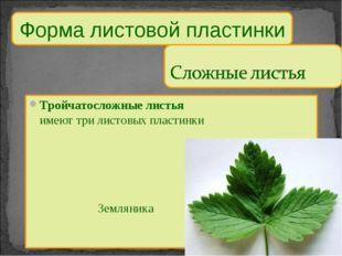 Тройчатосложные листья имеют три листовых пластинки Земляника Форма листов