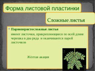 Парноперистосложные листья имеют листочки, прикрепляющиеся по всей длине чер