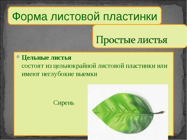 Форма листовой пластинки Цельные листья состоят из цельнокрайной листовой пла...