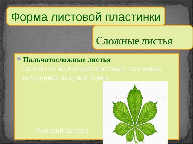 Пальчатосложные листья состоят из нескольких листовых пластинок, выходящих из...