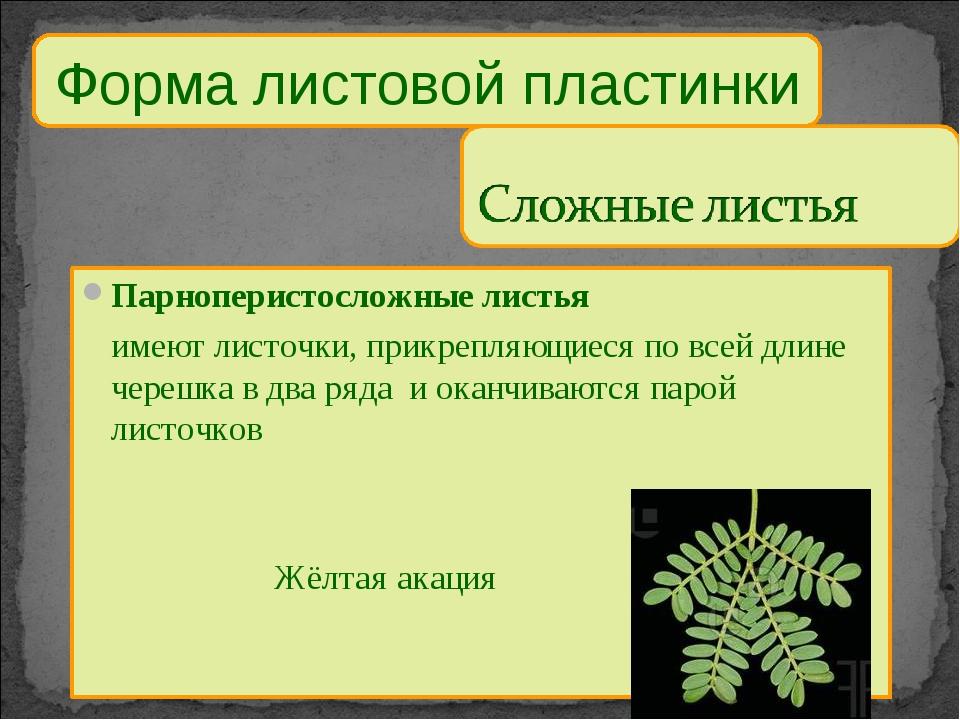 Парноперистосложные листья имеют листочки, прикрепляющиеся по всей длине чер...