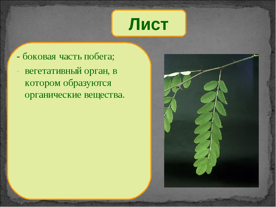 Лист - боковая часть побега; вегетативный орган, в котором образуются органич...