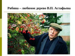 Рябина – любимое дерево В.П. Астафьева