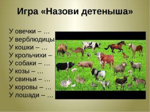 Игра «Назови детеныша» У овечки – … У верблюдицы – … У кошки – … У крольчихи