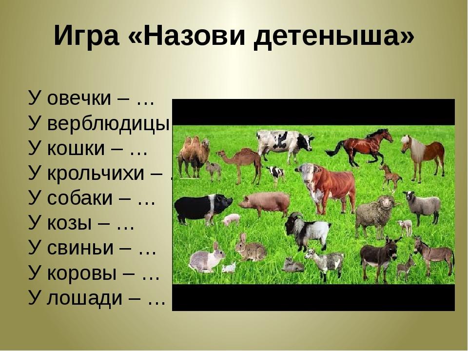 Игра «Назови детеныша» У овечки – … У верблюдицы – … У кошки – … У крольчихи...