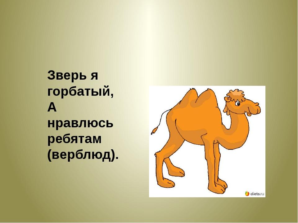 Зверь я горбатый, А нравлюсь ребятам (верблюд).