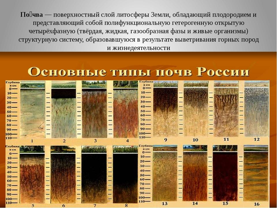 По́чва— поверхностный слойлитосферыЗемли, обладающийплодородиеми предста...