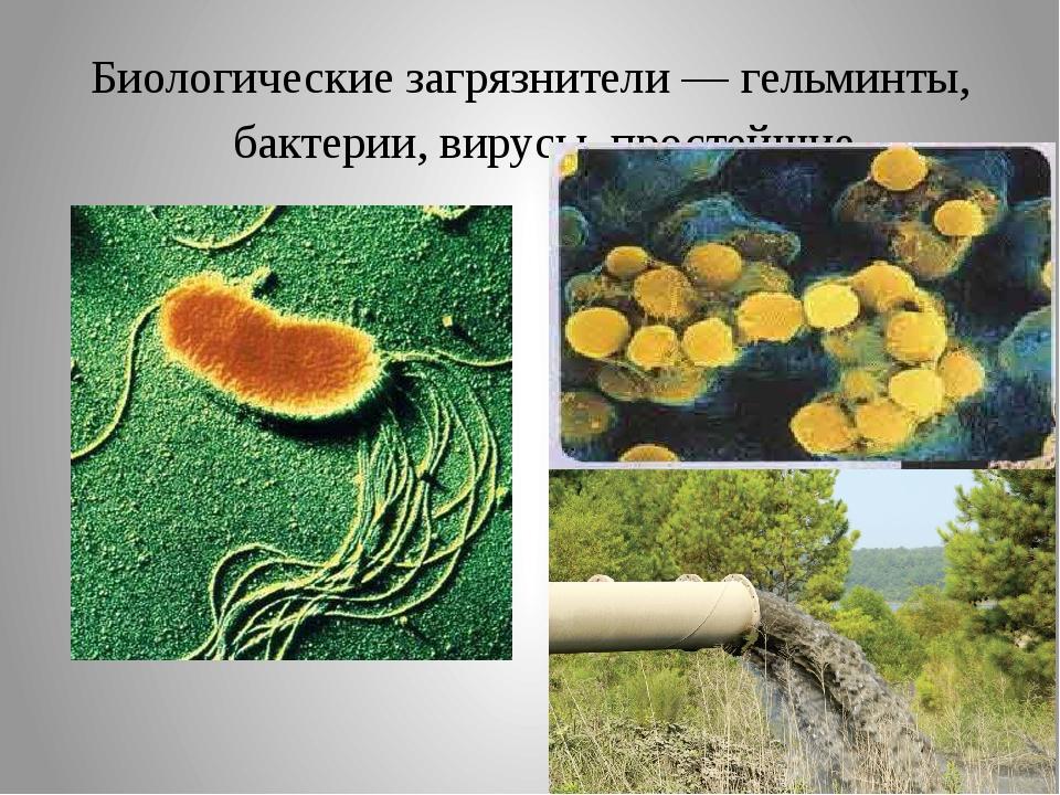 Биологические загрязнители — гельминты, бактерии, вирусы, простейшие.