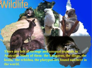 There are lots of strange and unusual animals in Australia. Many of them- the