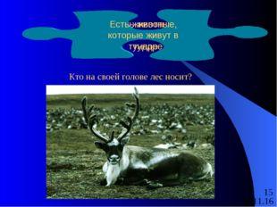 Есть животные, которые живут в тундре Кто на своей голове лес носит? Есть жив
