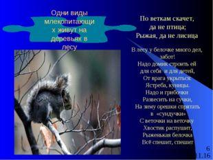 По веткам скачет, да не птица; Рыжая, да не лисица В лесу у белочке много де