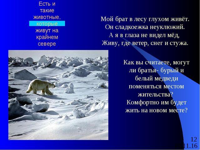 Есть и такие животные, которые живут на крайнем севере Мой брат в лесу глухом...