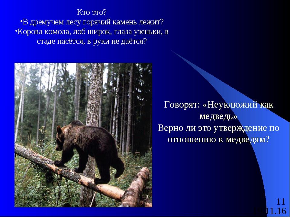 Кто это? В дремучем лесу горячий камень лежит? Корова комола, лоб широк, глаз...