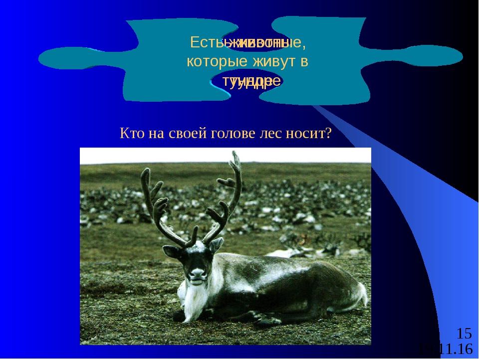 Есть животные, которые живут в тундре Кто на своей голове лес носит? Есть жив...