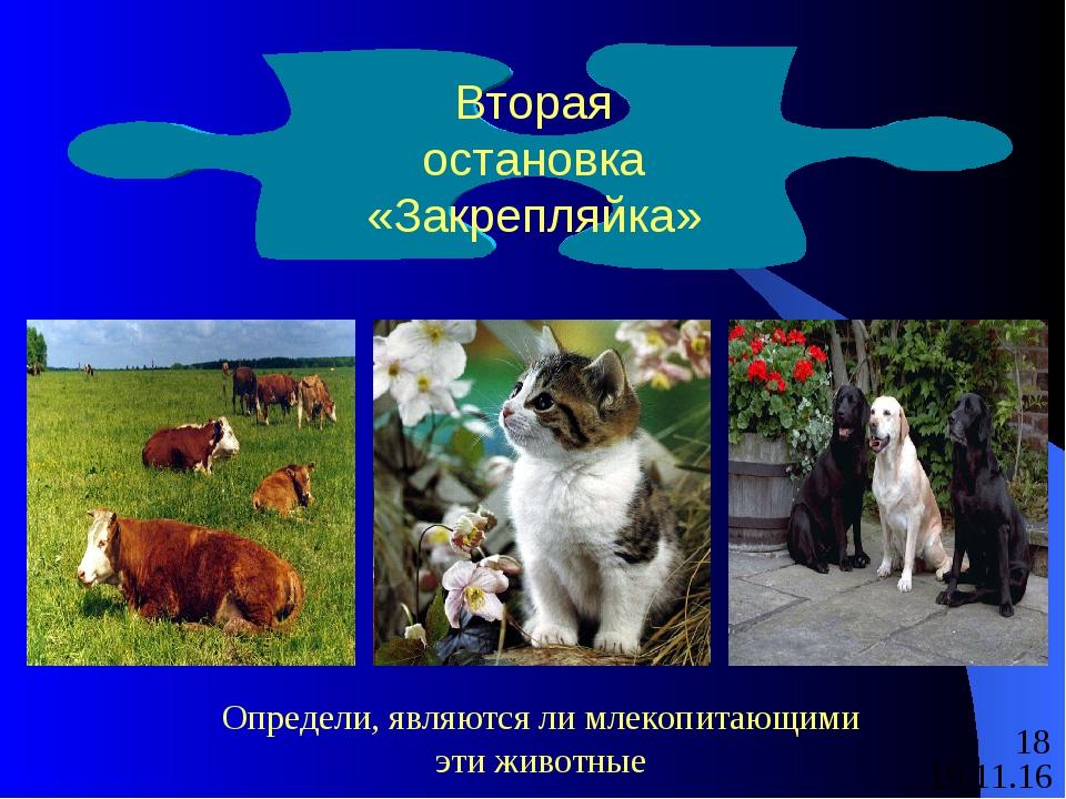 Вторая остановка «Закрепляйка» Определи, являются ли млекопитающими эти живот...