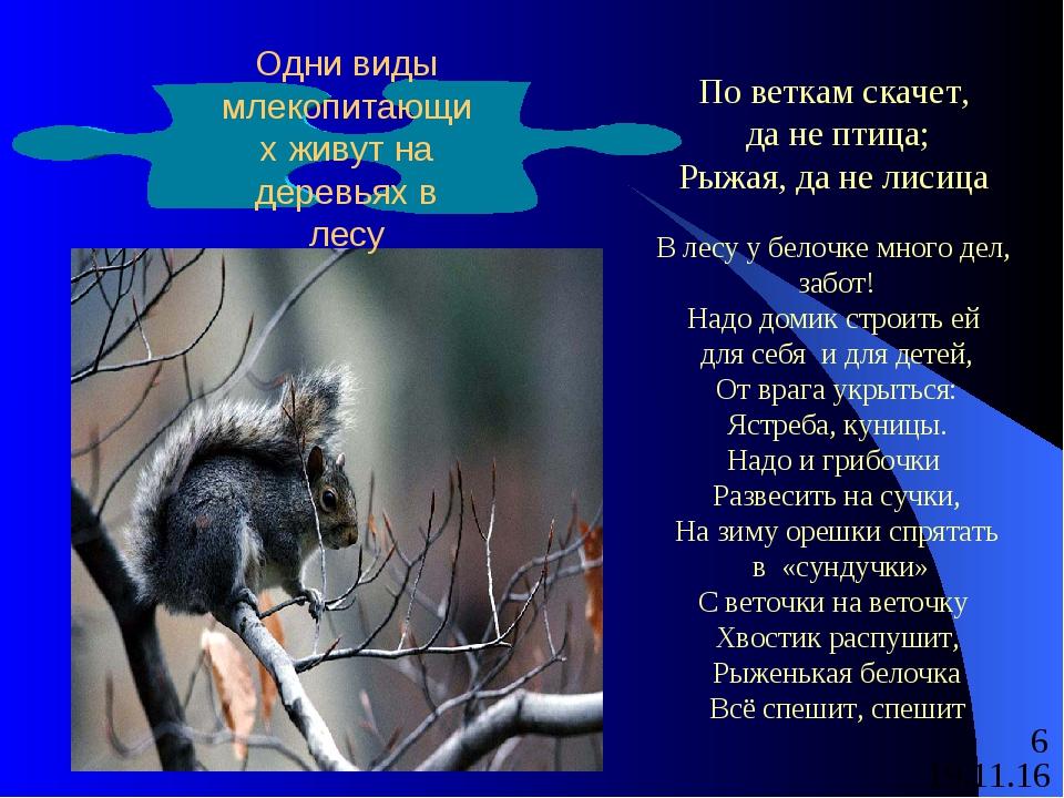По веткам скачет, да не птица; Рыжая, да не лисица В лесу у белочке много де...